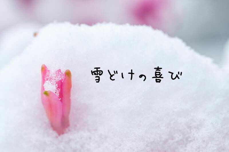雪解けの喜び