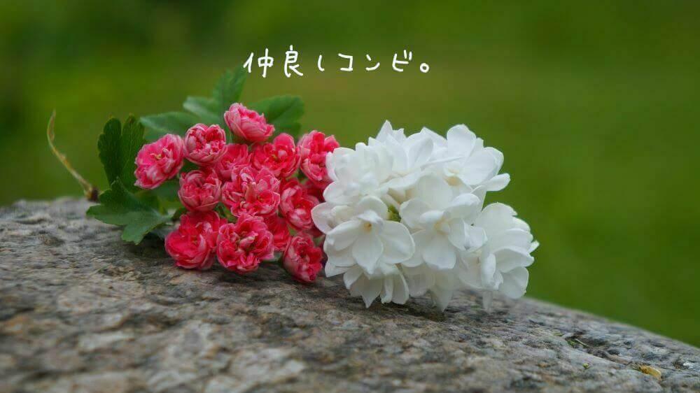 [Cocoon] コンビ設定 ~ ホームイメージ&ノーイメージ
