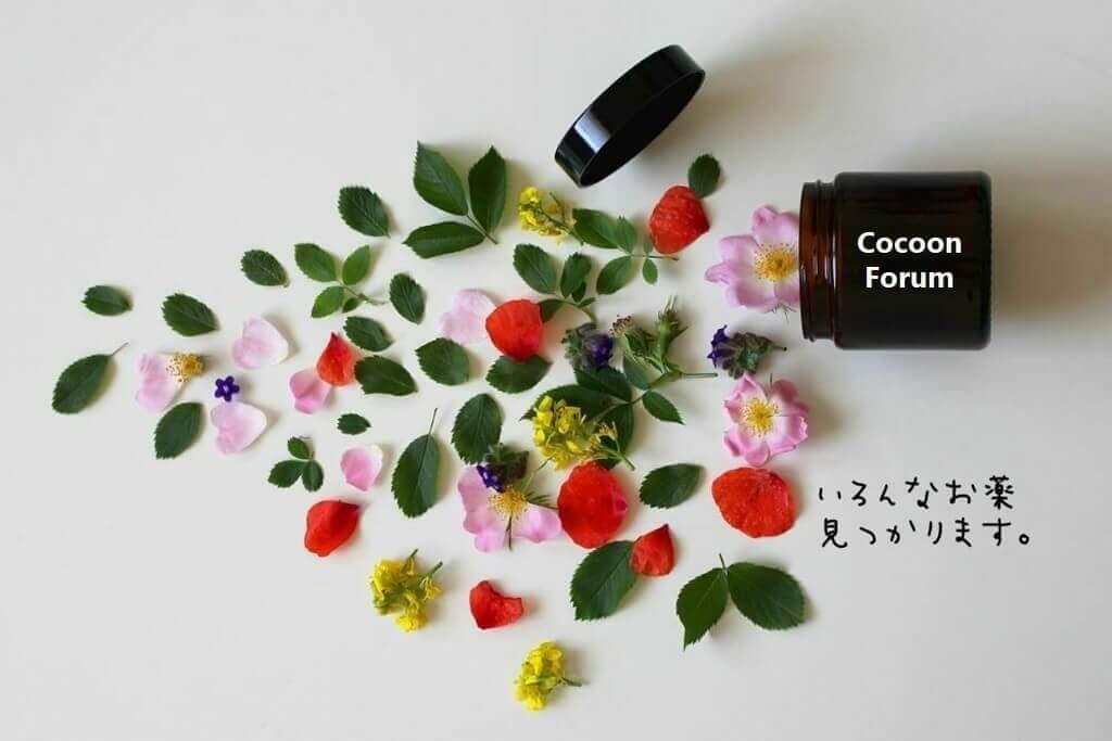 [Cocoon] フォーラムの利用体験 ~ エラーの処方箋